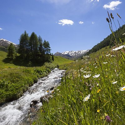 Juicy mountain meadows in summer in Val Venosta